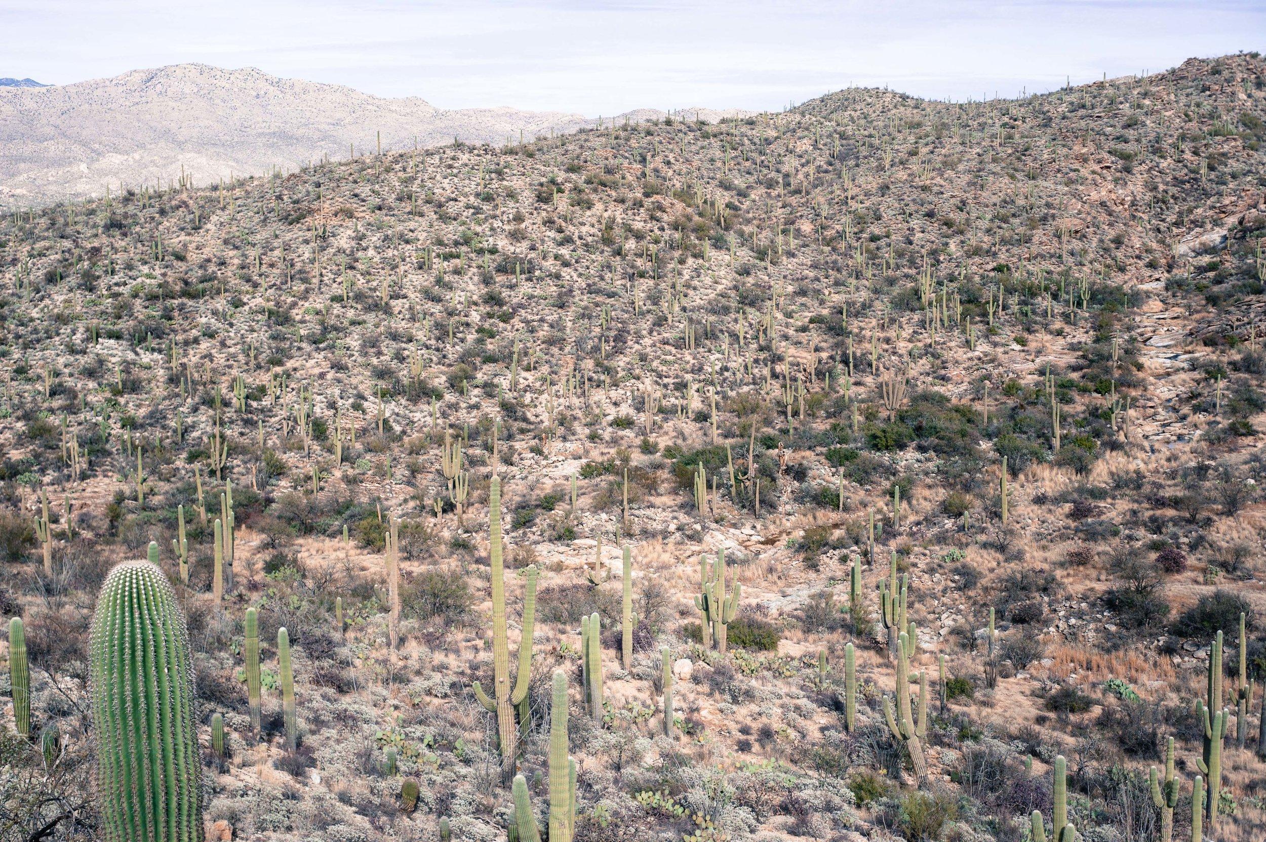 cassandra_artprints_saguaro-10.jpg