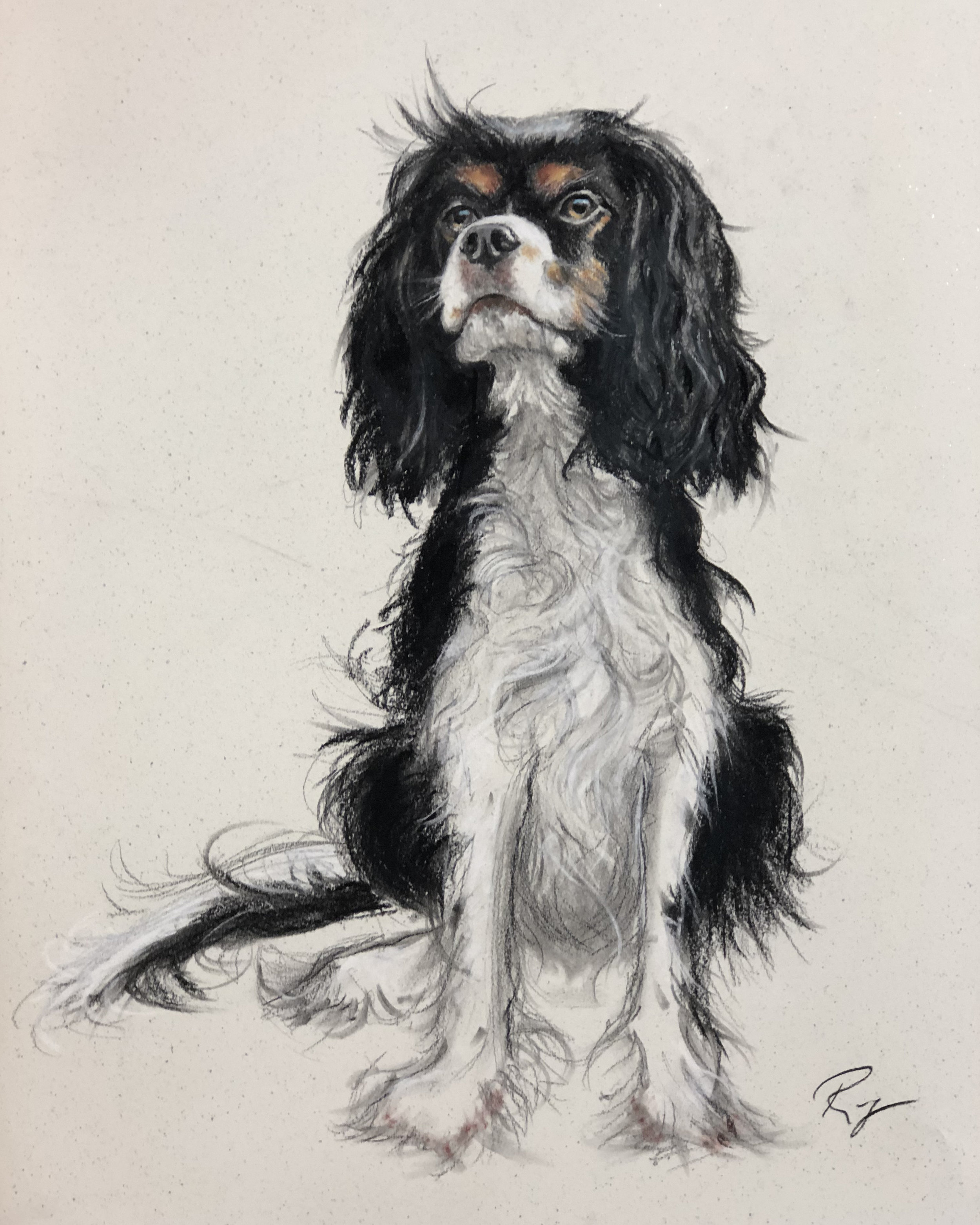 """Ollie , 39"""" x 25"""", charcoal and dry pastels on paper"""