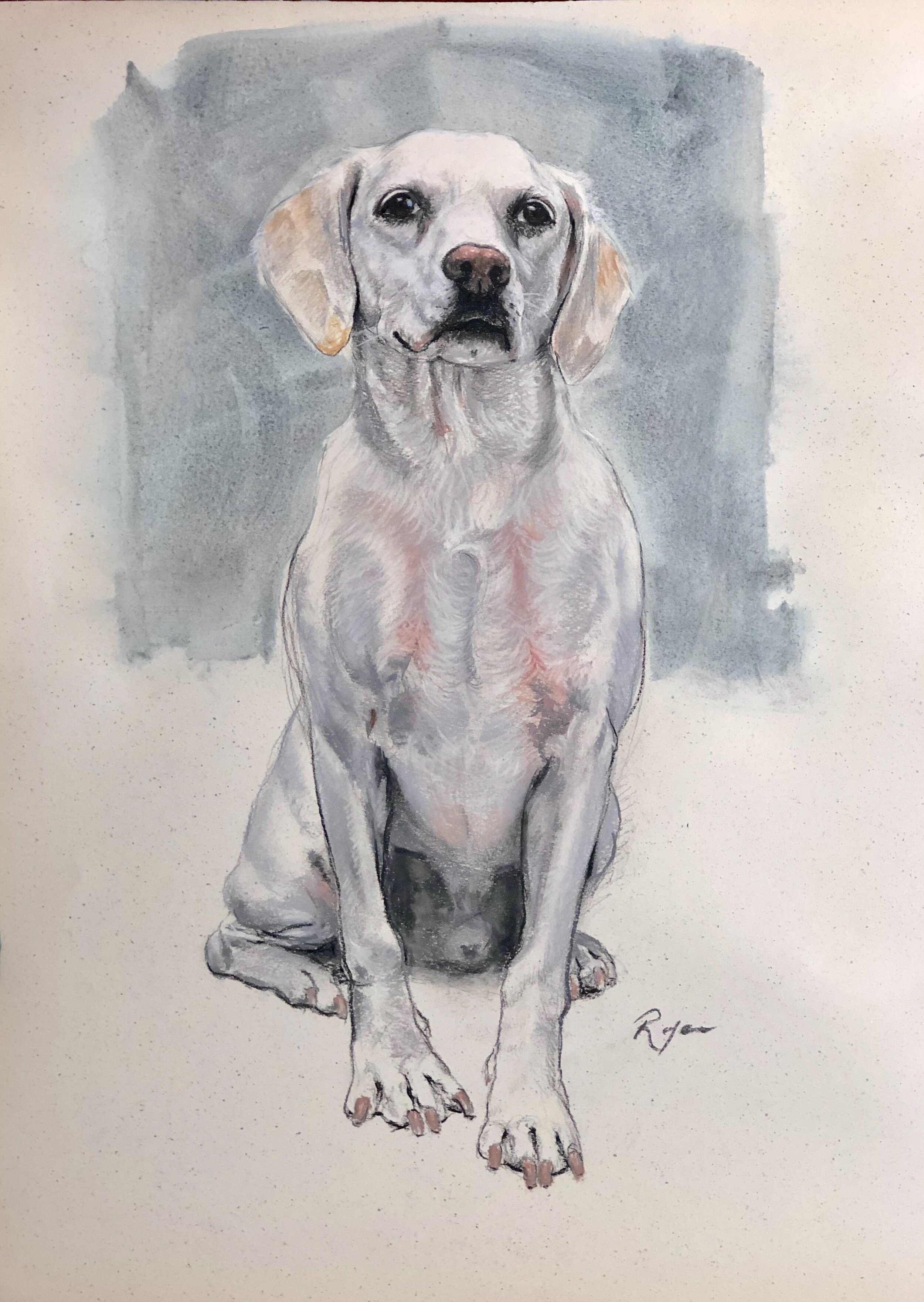 """Rocky, 19"""" x 25"""", charcoal, watercolor and dry pastels on paper"""