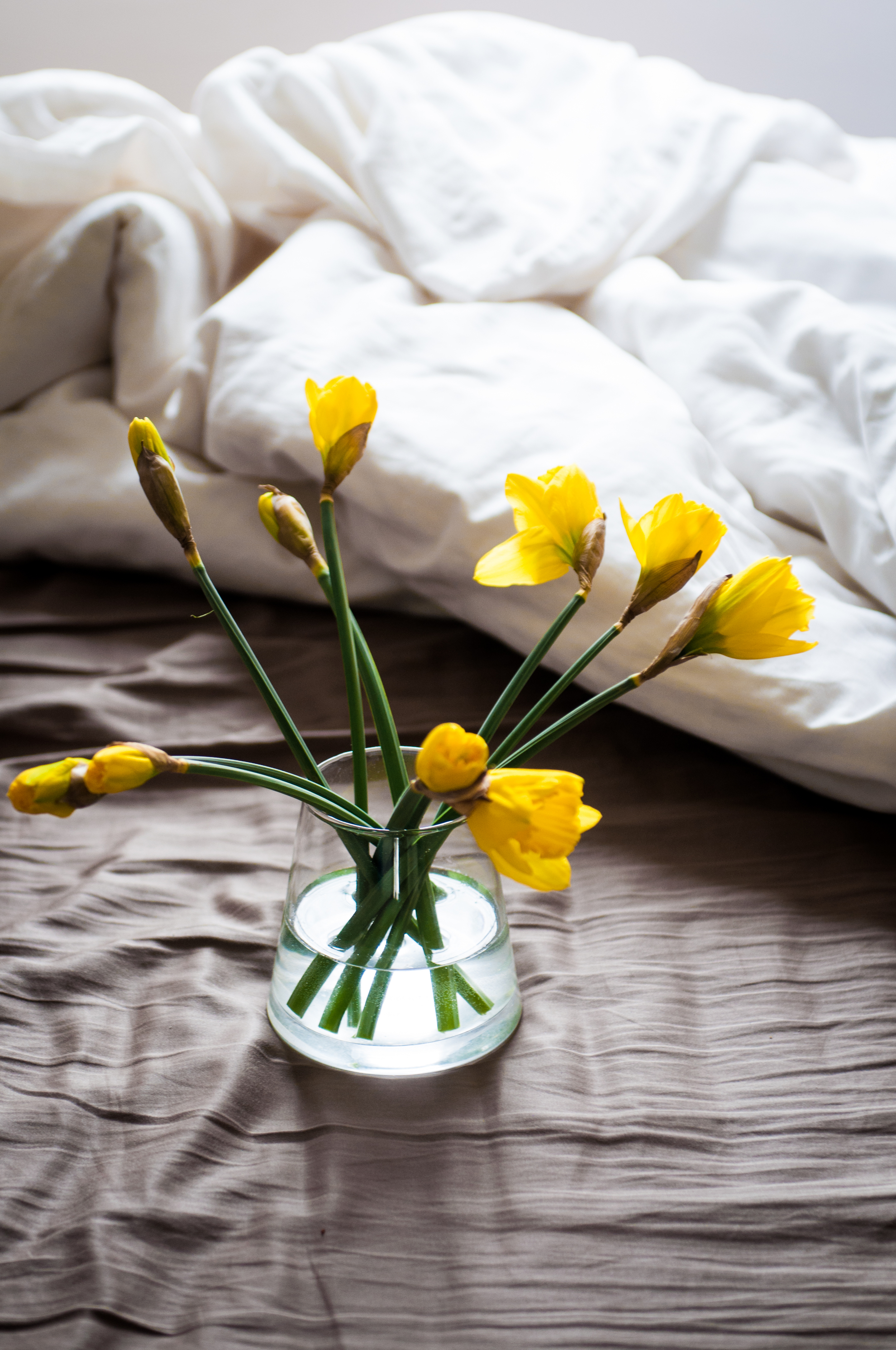 Waking up to these glorious yellows is one of the simplest pleasures of my recent days. They brighten upthe room so!