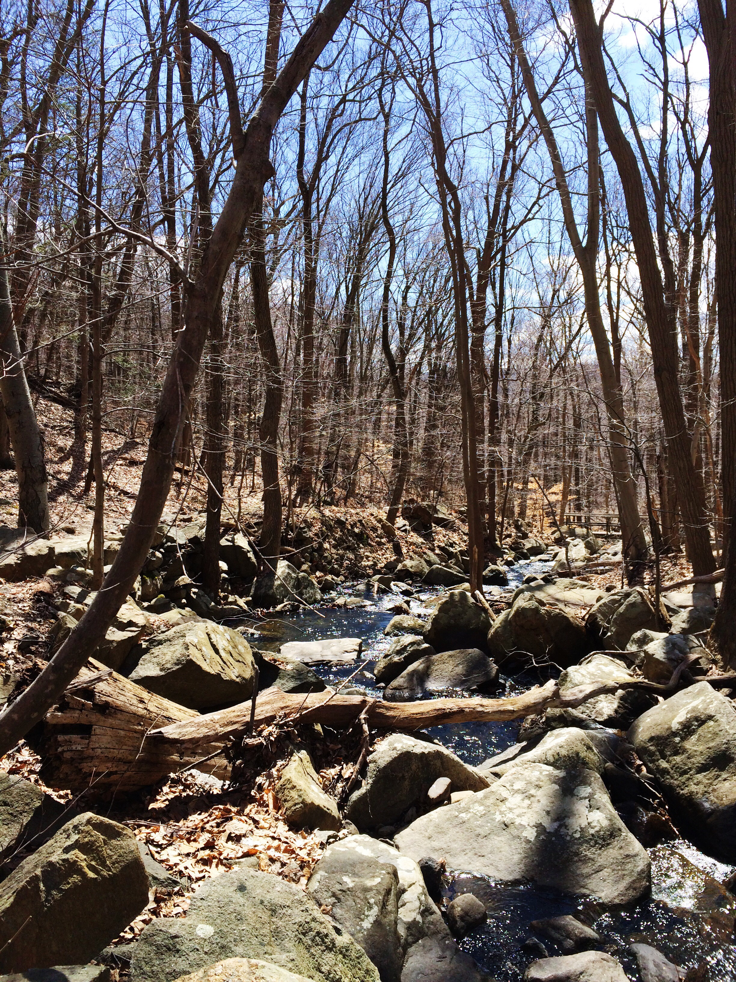 Along the trail in upstate NY, hiking up Mt. Taurus near the village ofCold Spring