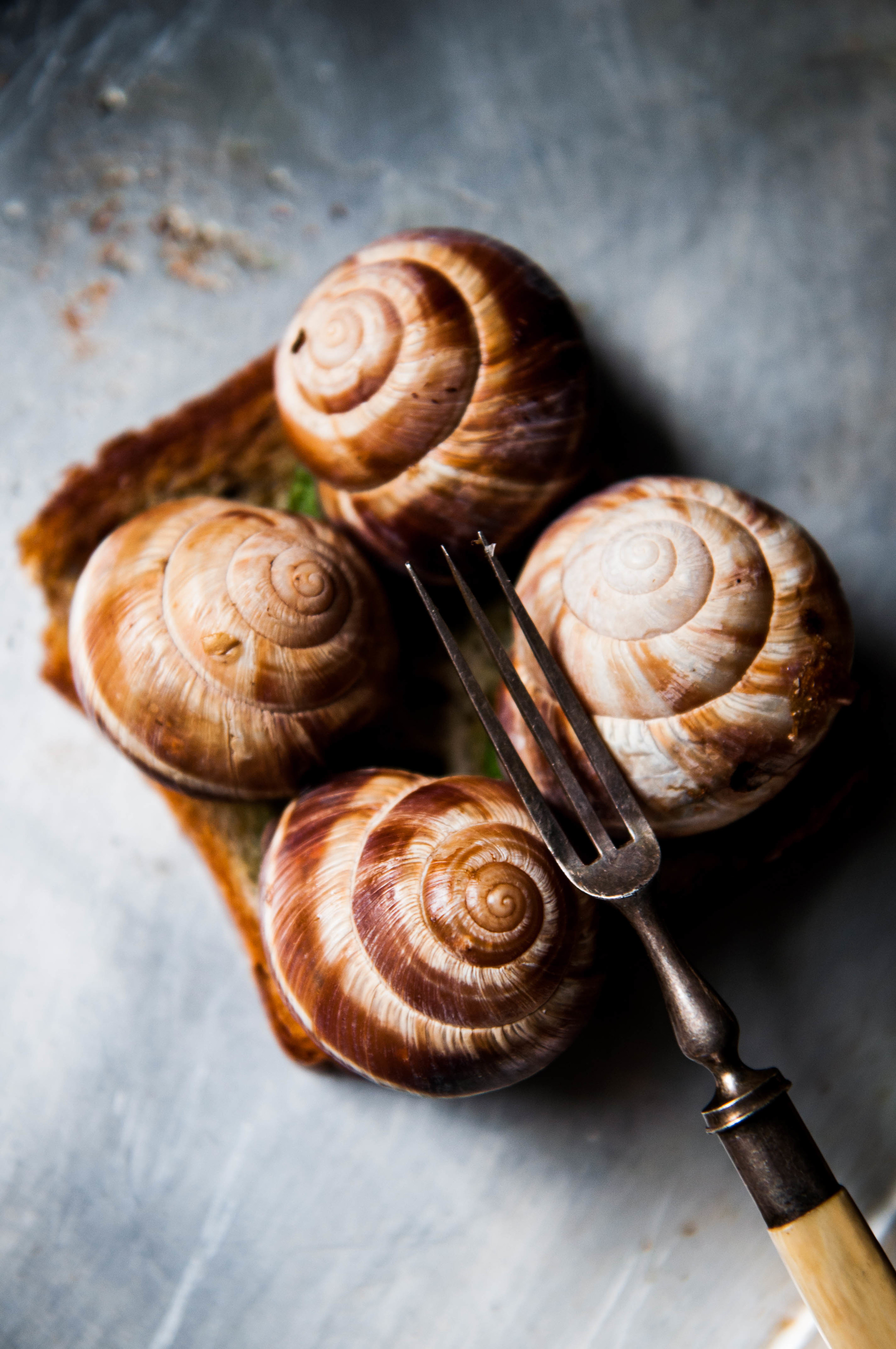Roasted Escargots in Shell on Sourdough Toast