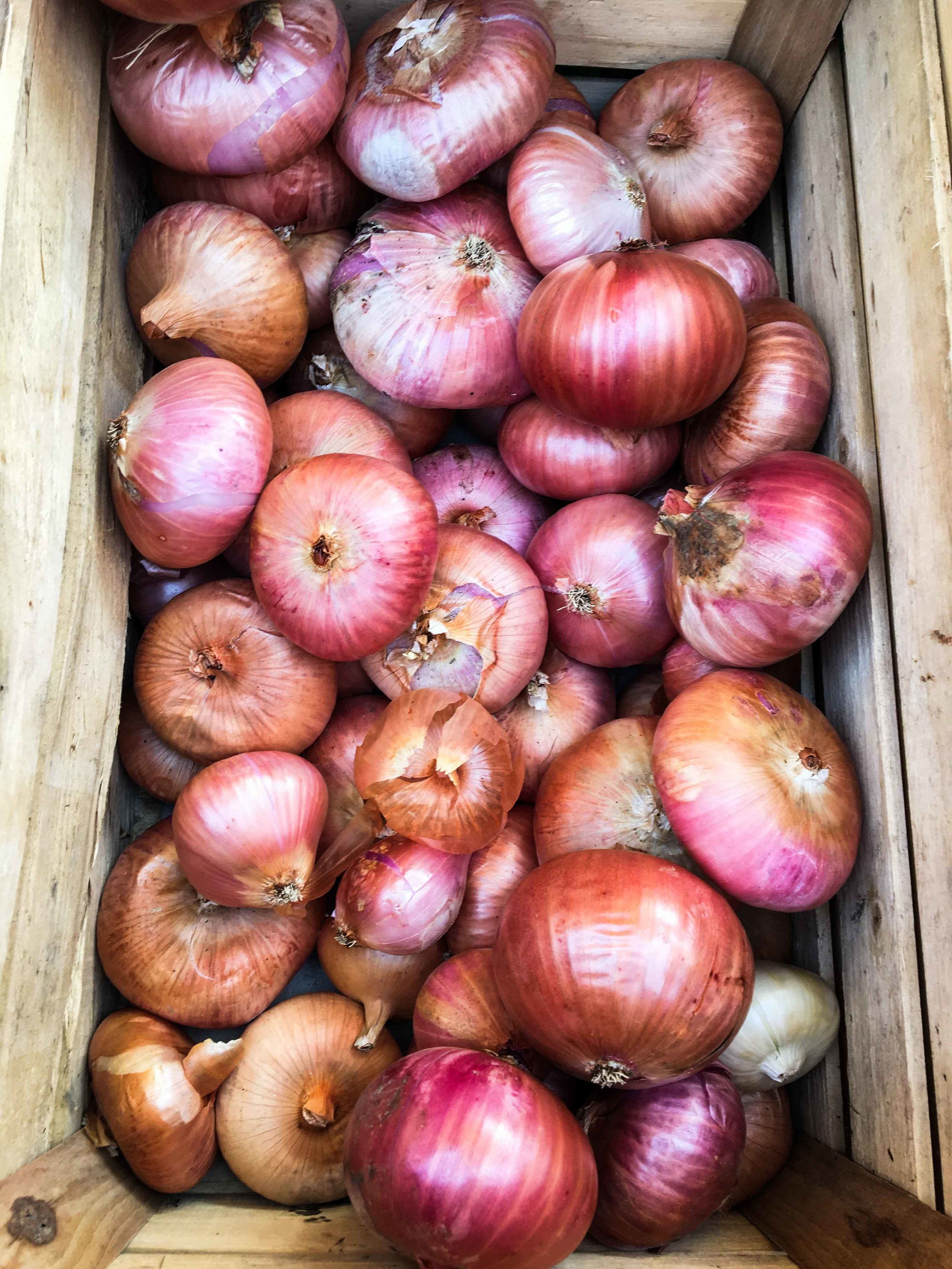 onions from reggio emilia September