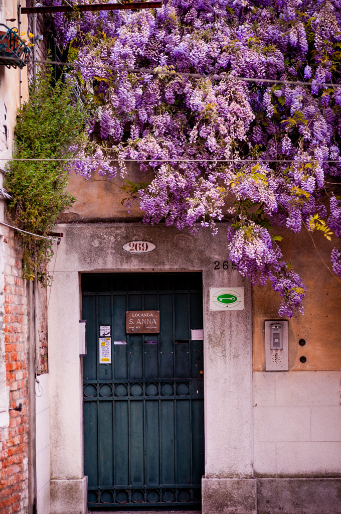 Wisteria-Lane-Venice1.jpg