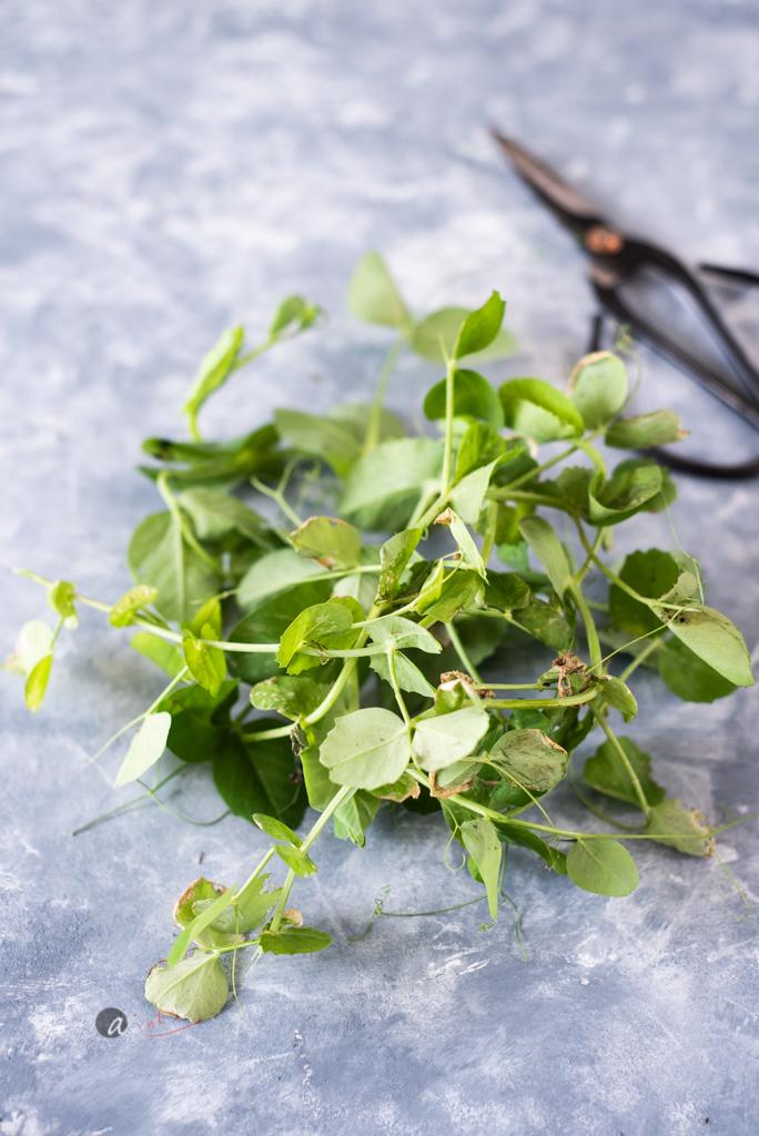 Leftover-unplanted-peas.jpg