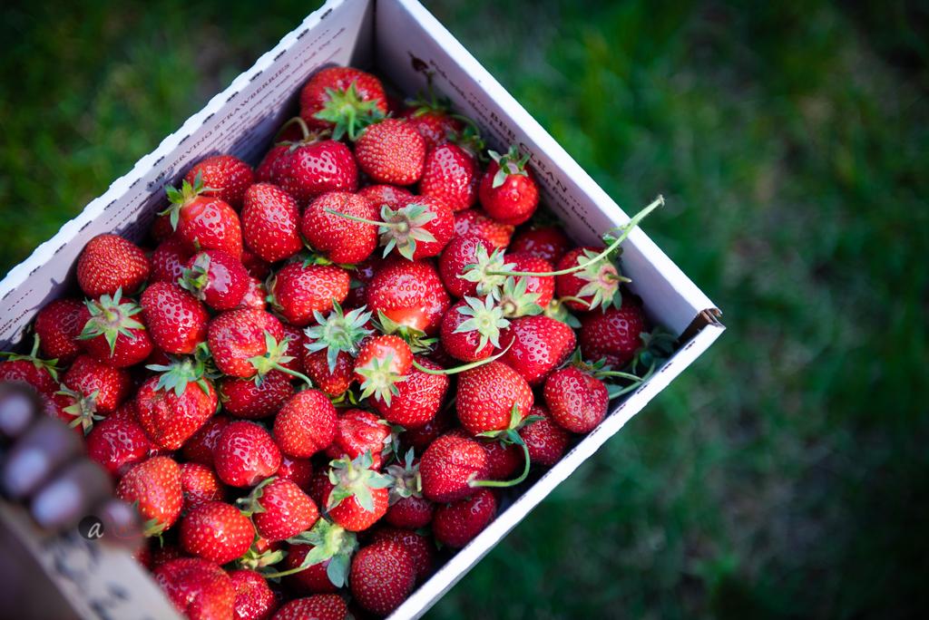 carrying-berries.jpg