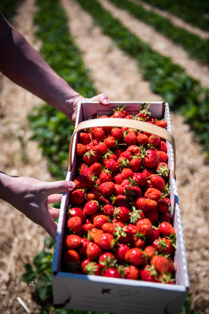 a-basket-full-of-berries.jpg