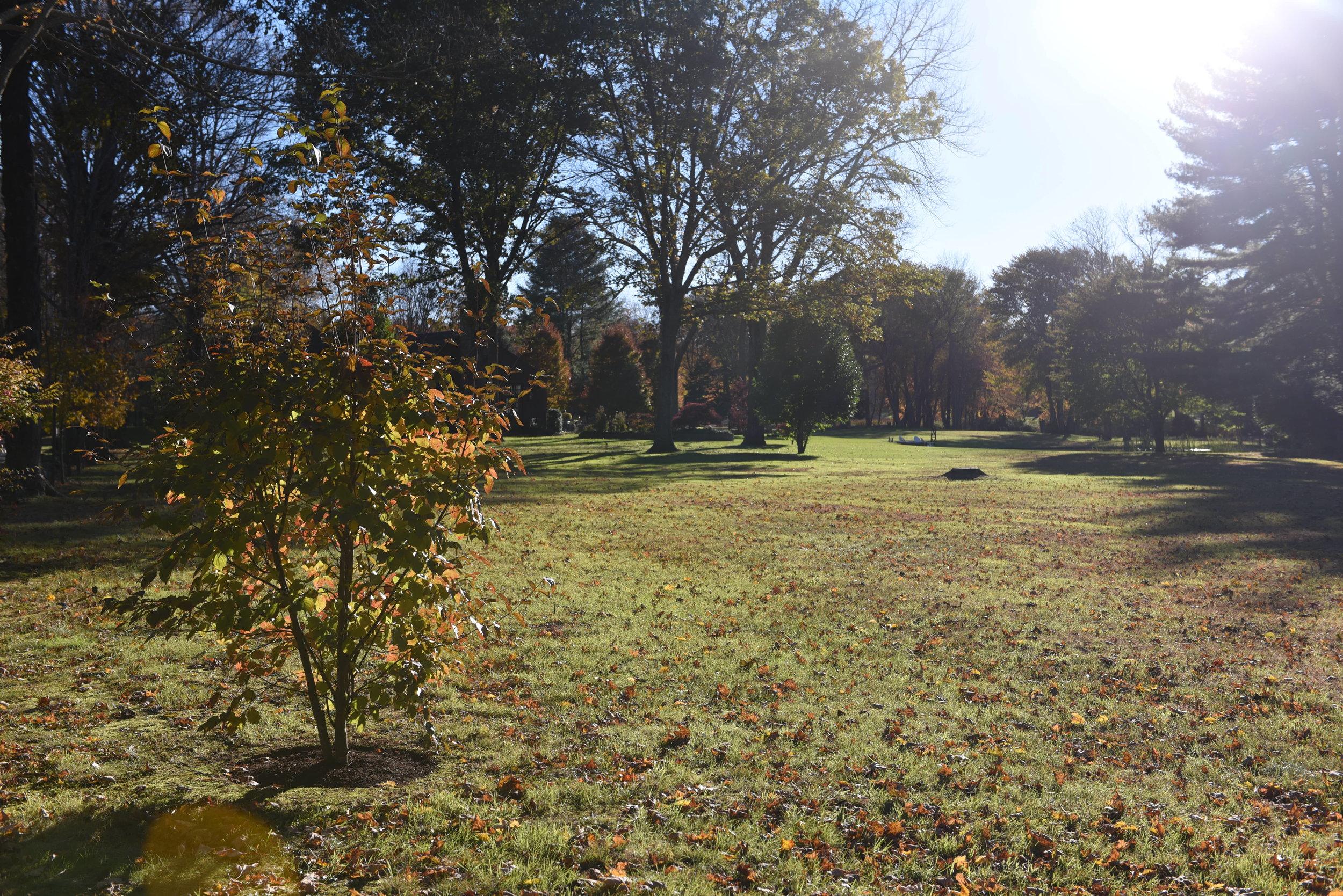 Fall-in-Connecticut.jpg