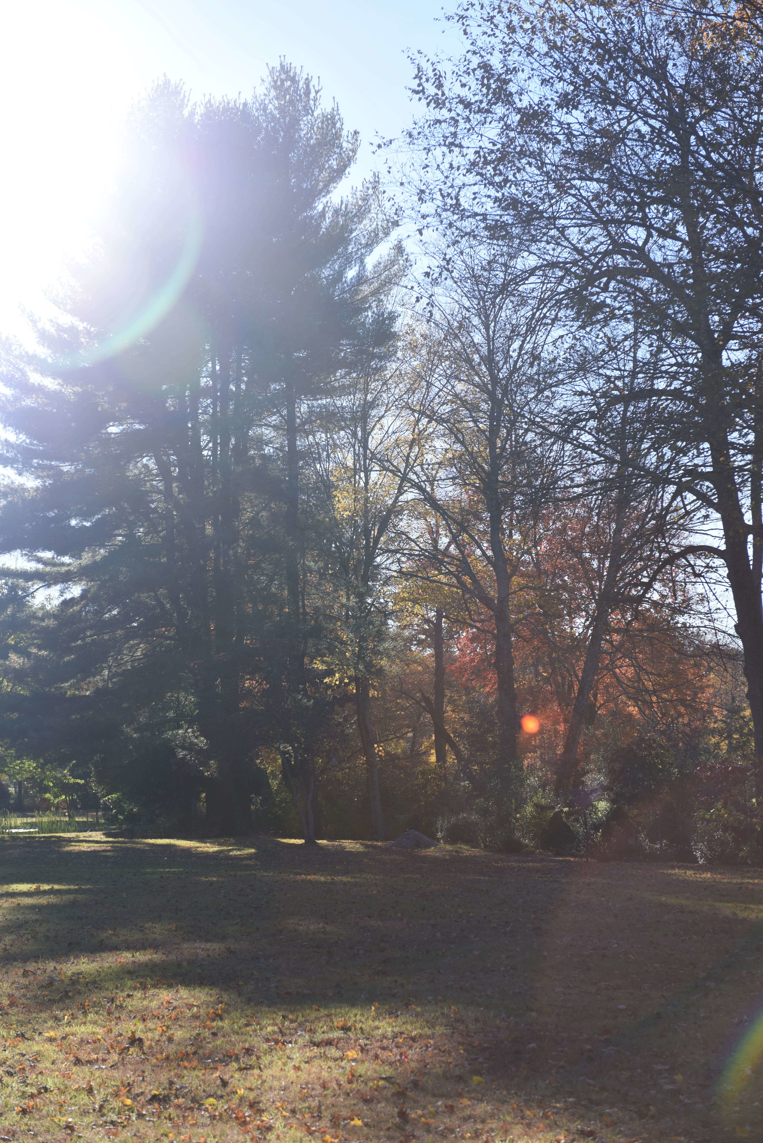 Fall-Afternoon.jpg