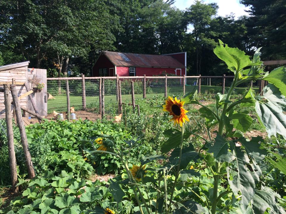 Farm to table meal cooking classes- or just enjoy a farm to table meal!