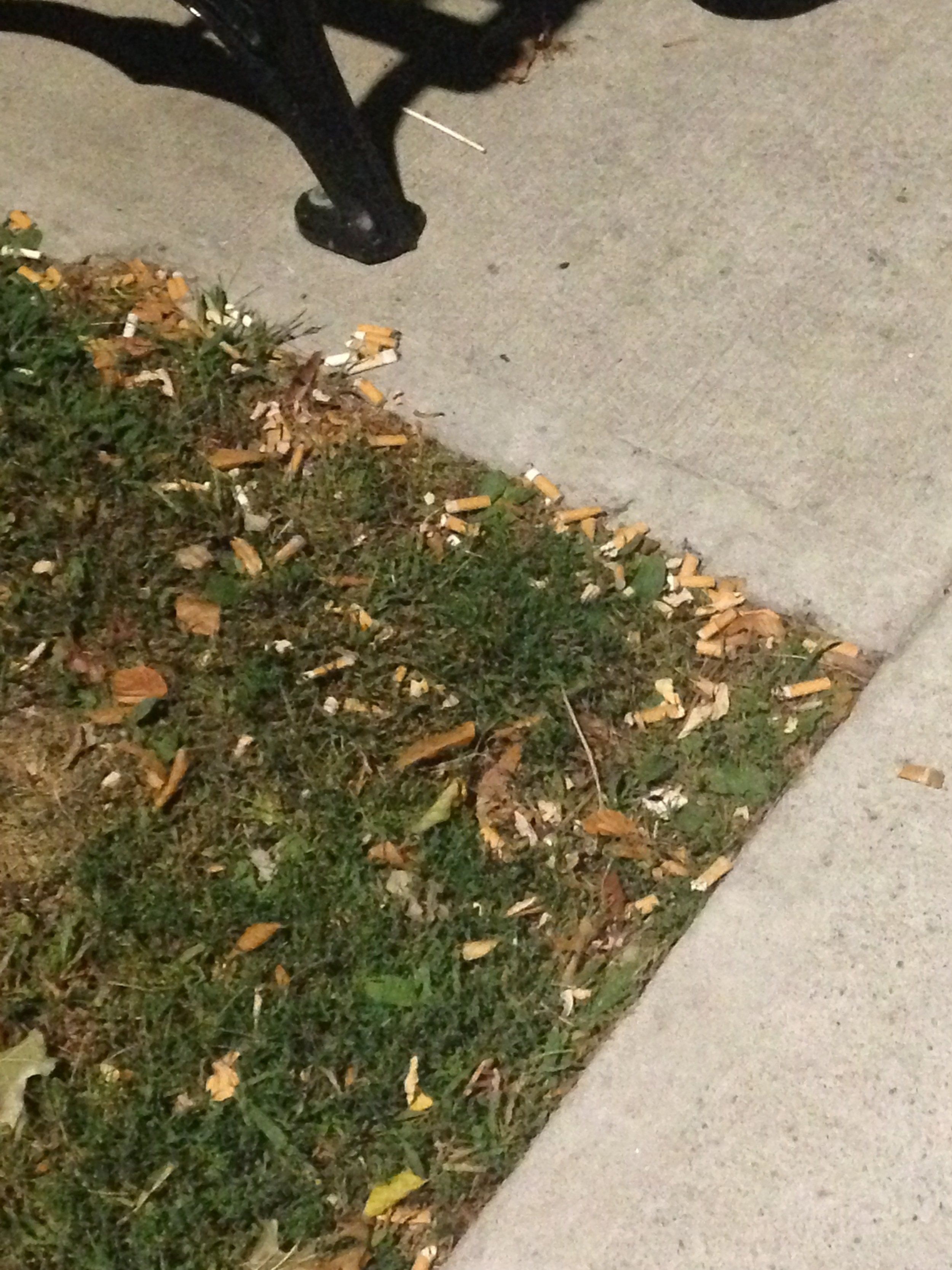 Cigarette butts near a bench on Kimball Ave. Photo by Janaki Chadha '17