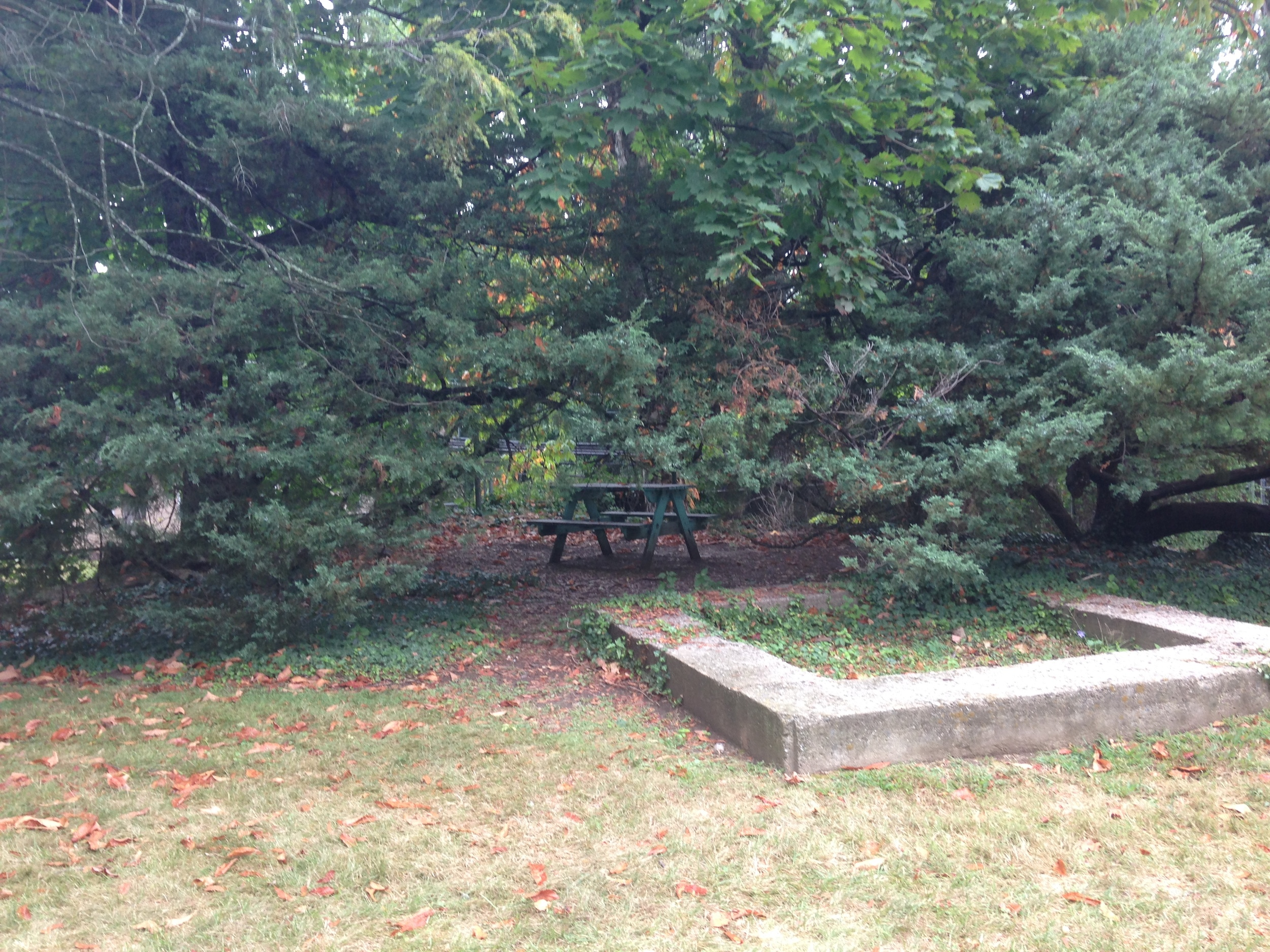 Secluded picnic table in the area outside the New Dorms known as 'Narnia'.   Photo by Janaki Chadha '17