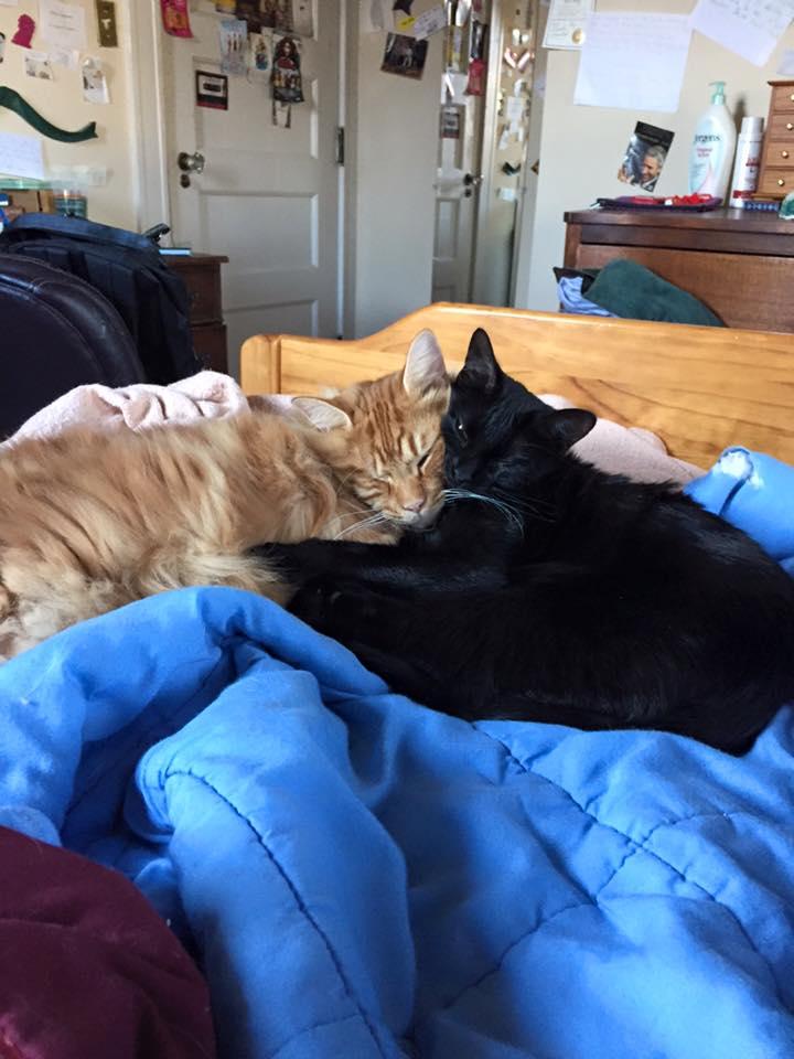 Student Alex Biggs' two therapy cats. Photo courtesy of Alex Biggs