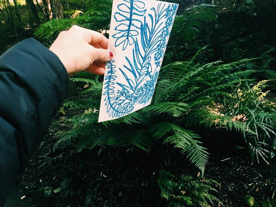 Fern sketches from an oxygenated afternoon in The Wellington Botanic Garden.