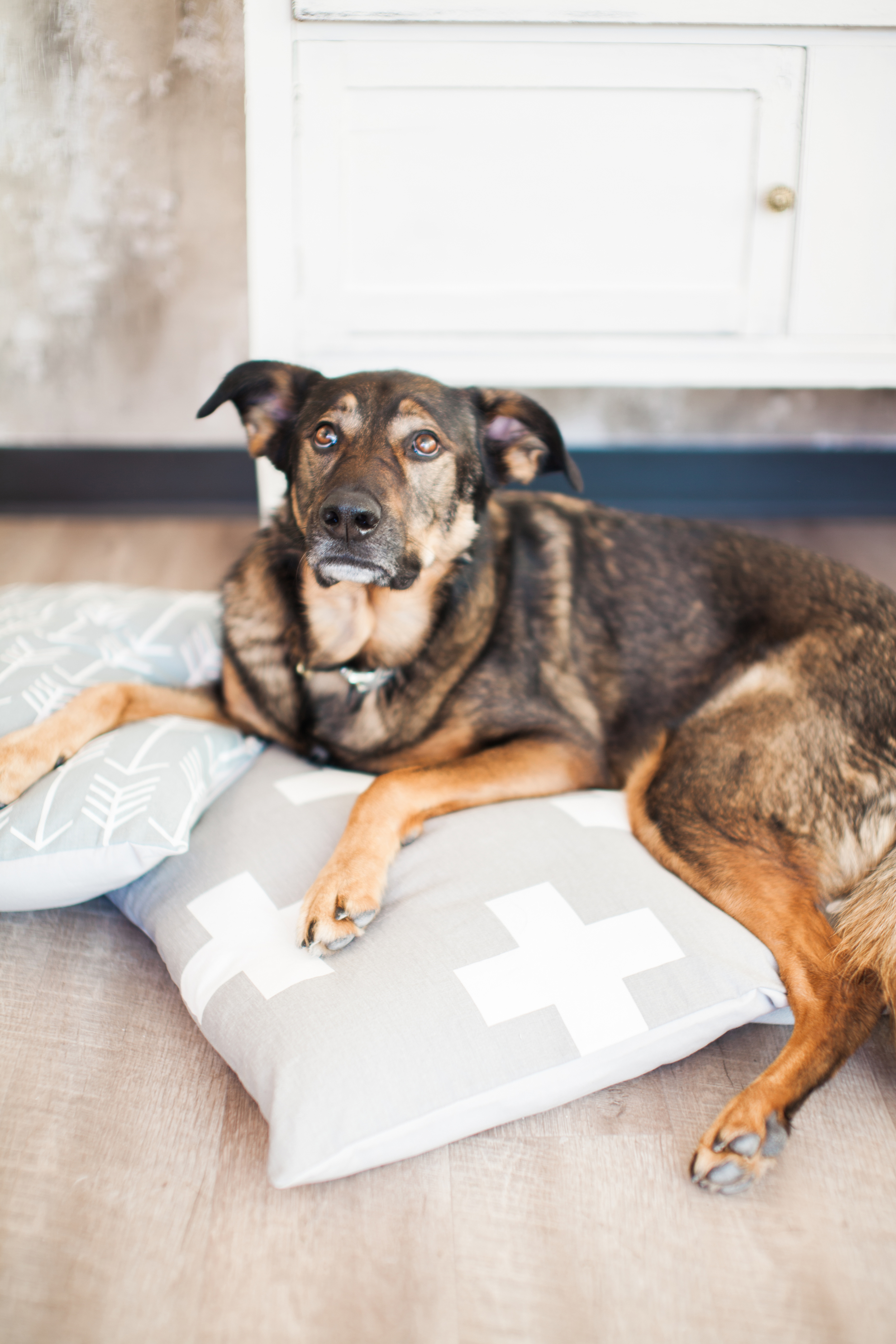 Super sweet Leroy cozying up on M&H Decor dog beds.