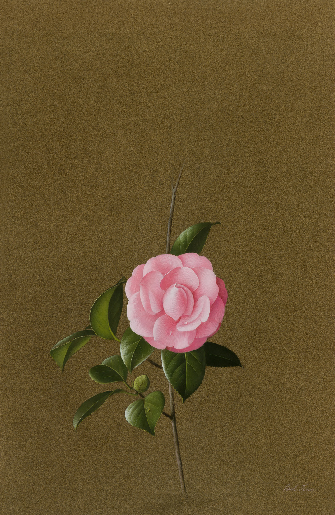 Paul Jones Pink Virginia France Rosea gouache on paper