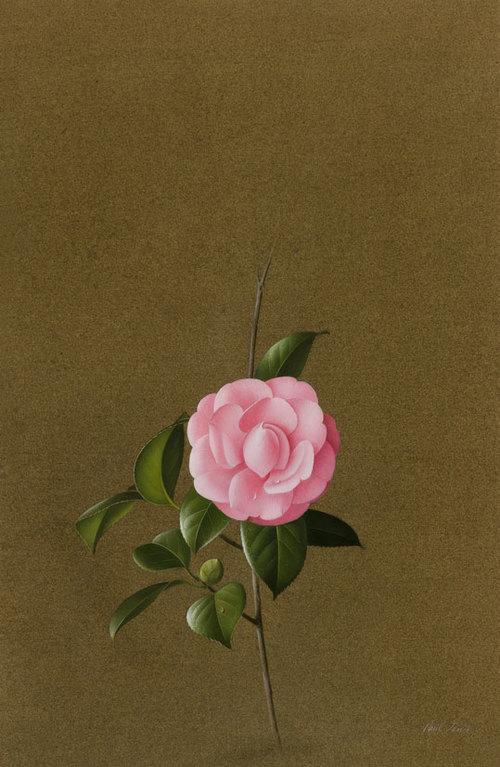 Paul Jones - Pink Virginia France Rosea