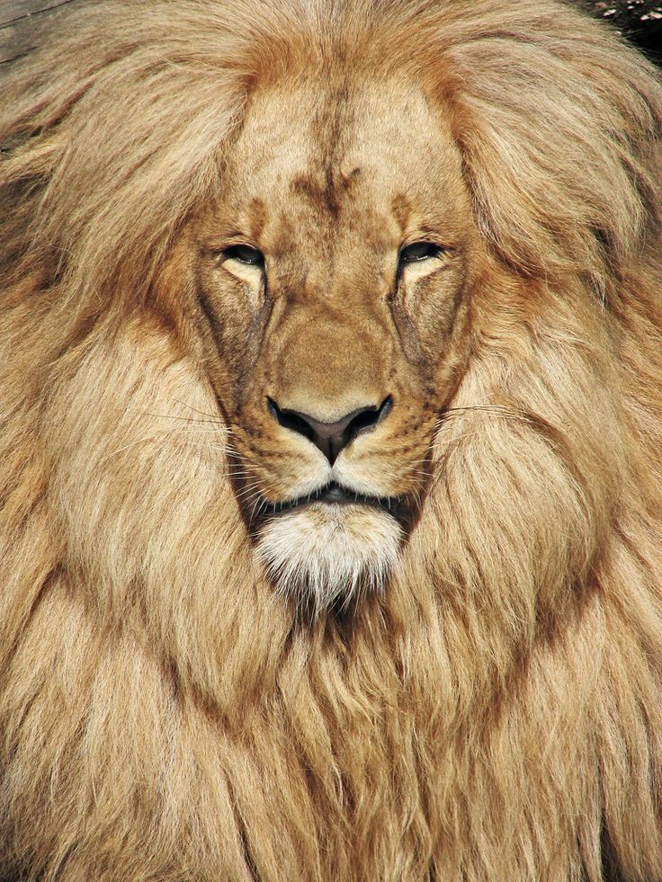 This guy definitely uses high quality essential oils in his Lion's Mane.