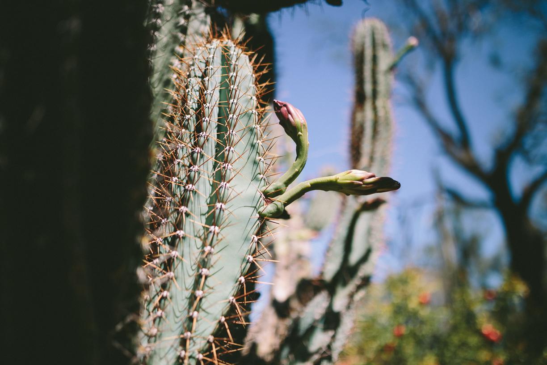 Cactus-4.jpg
