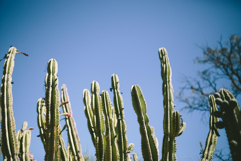Cactus-5.jpg