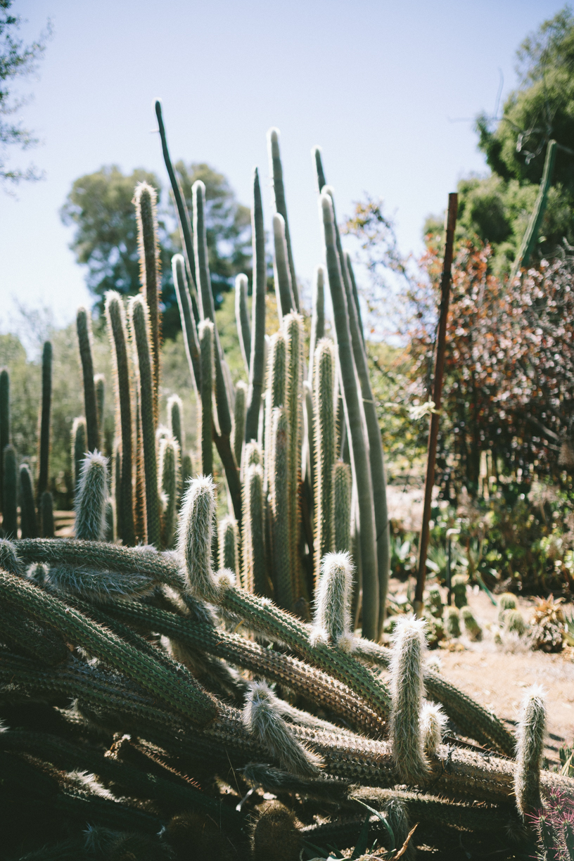 Cactus-11.jpg