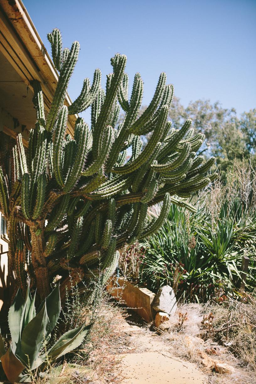 Cactus-10.jpg