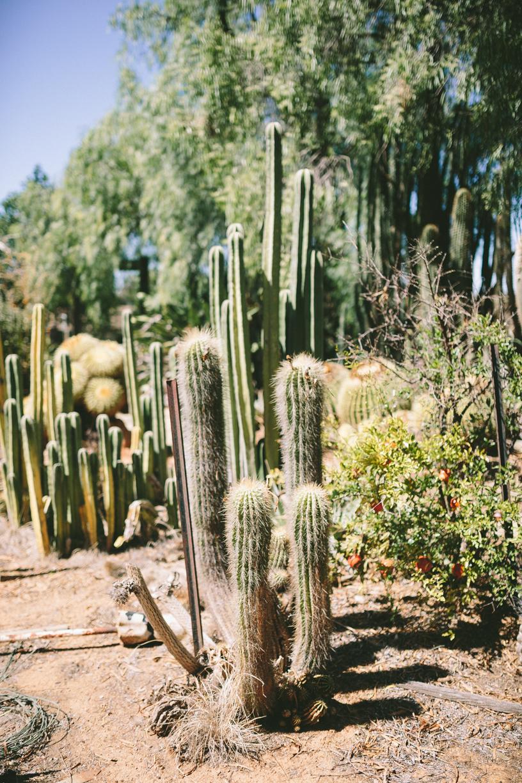 Cactus-12.jpg