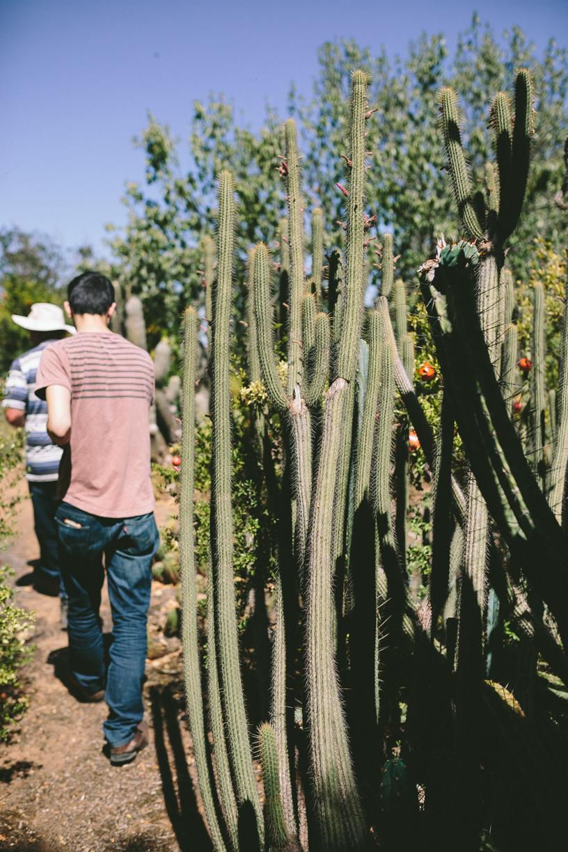 Cactus-15.jpg