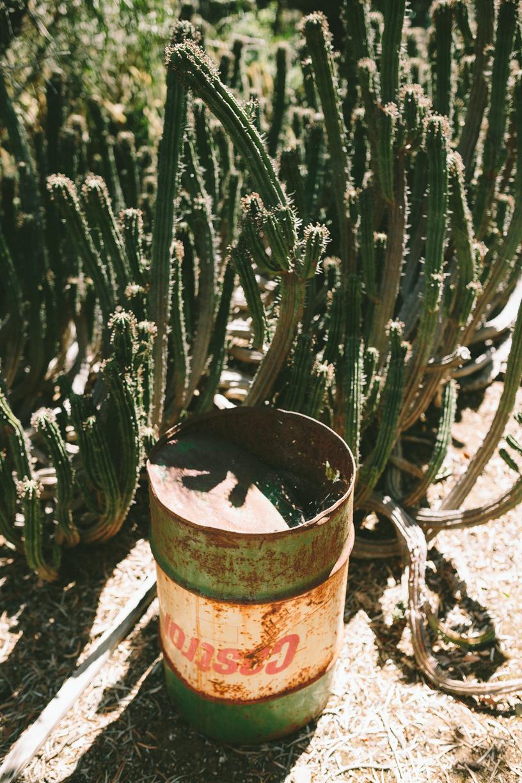 Cactus-16.jpg