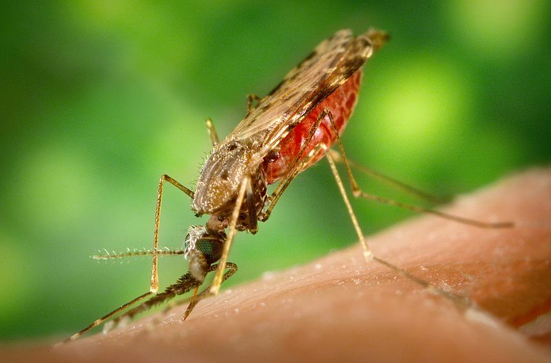 anopheles-mosquito-mosi-guard-insect-repellent