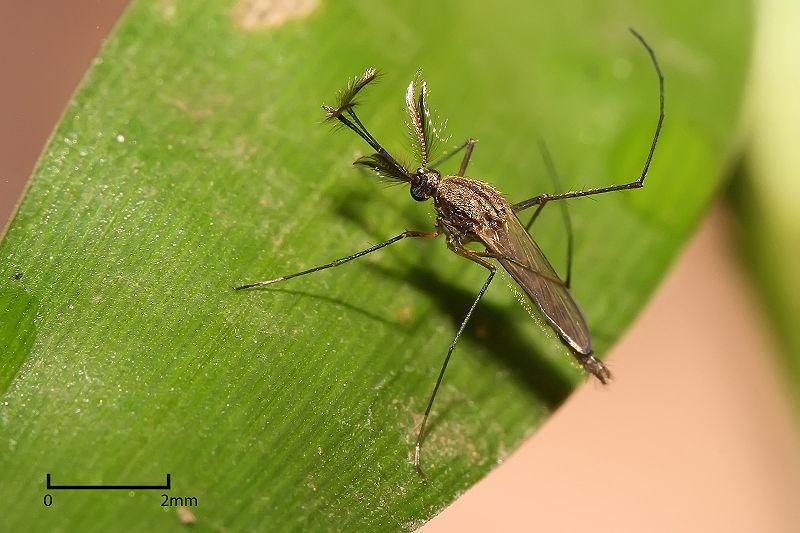 culex-mosquito-mosi-guard-insect-repellent