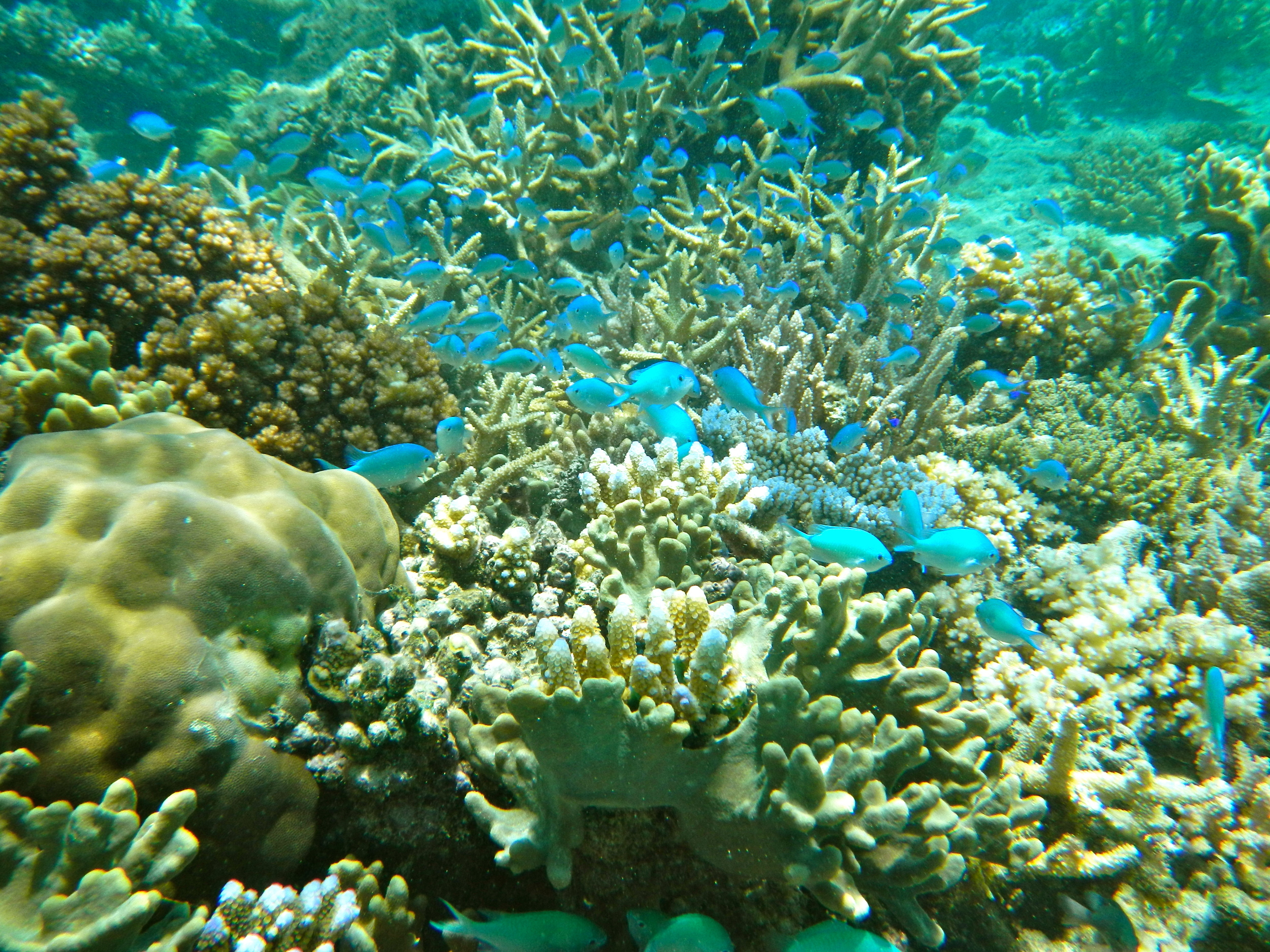 The Rainbow Reef, Fiji is a snorkelers and divers paradise