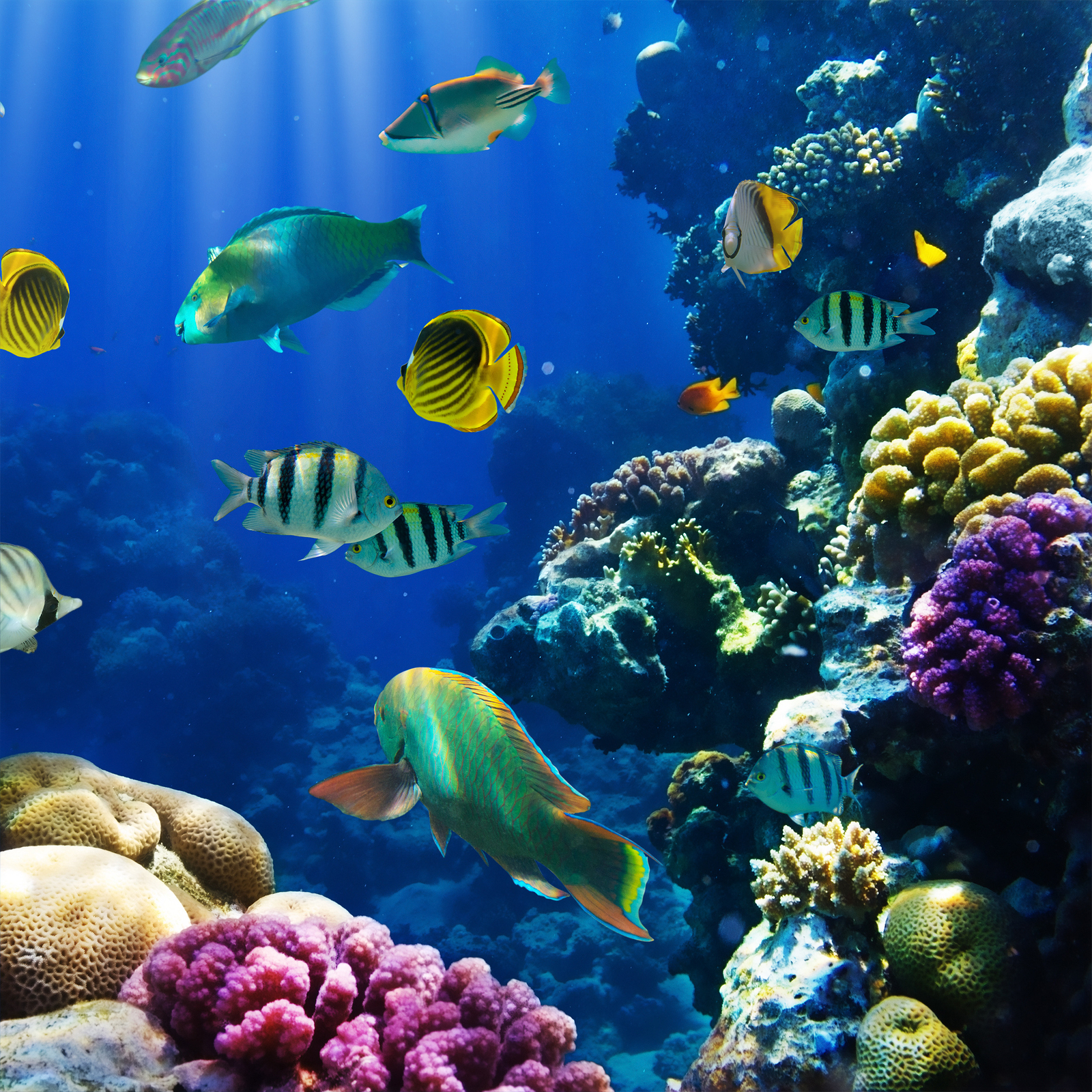 Fiji has over one thousand fish species and over 200 hard and soft coral varieties for your diving pleasure