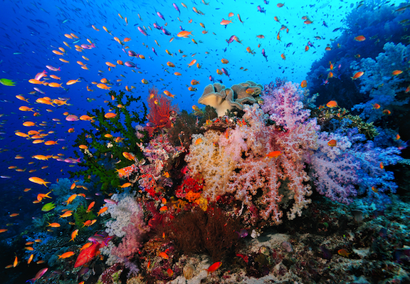 Rainbow Reef, Soft Coral Capital of the World