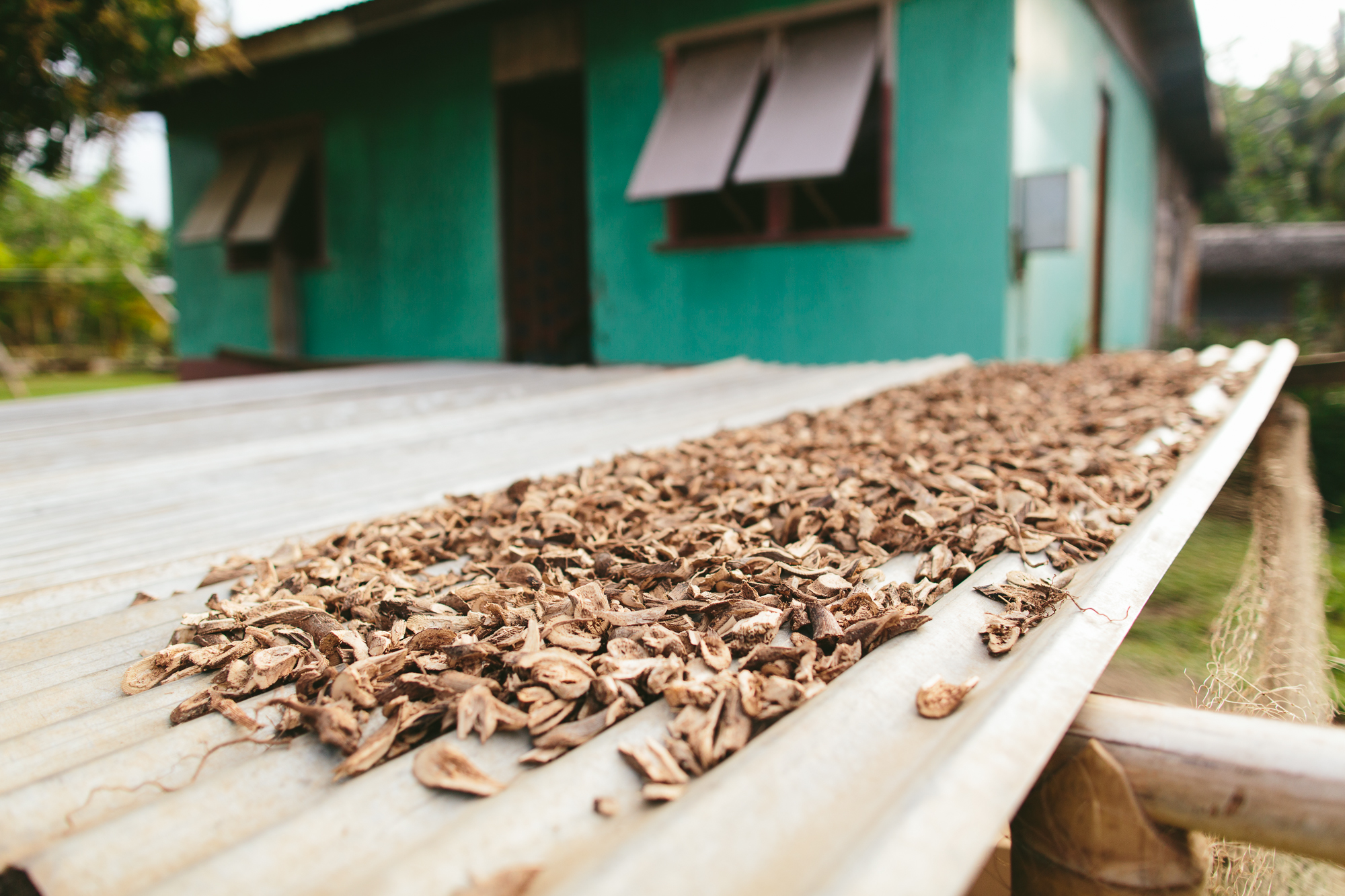 Drying Kava in Village - The Remote Resort Fiji Islands