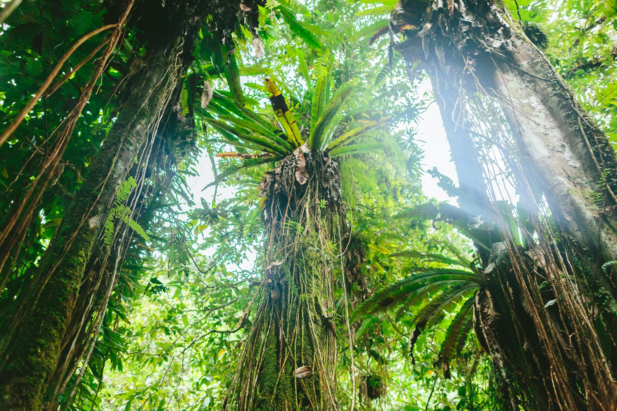 Foliage - Bouma Waterfalls - Taveuni Insider Day Trip - The Remote Resort Fiji Islands