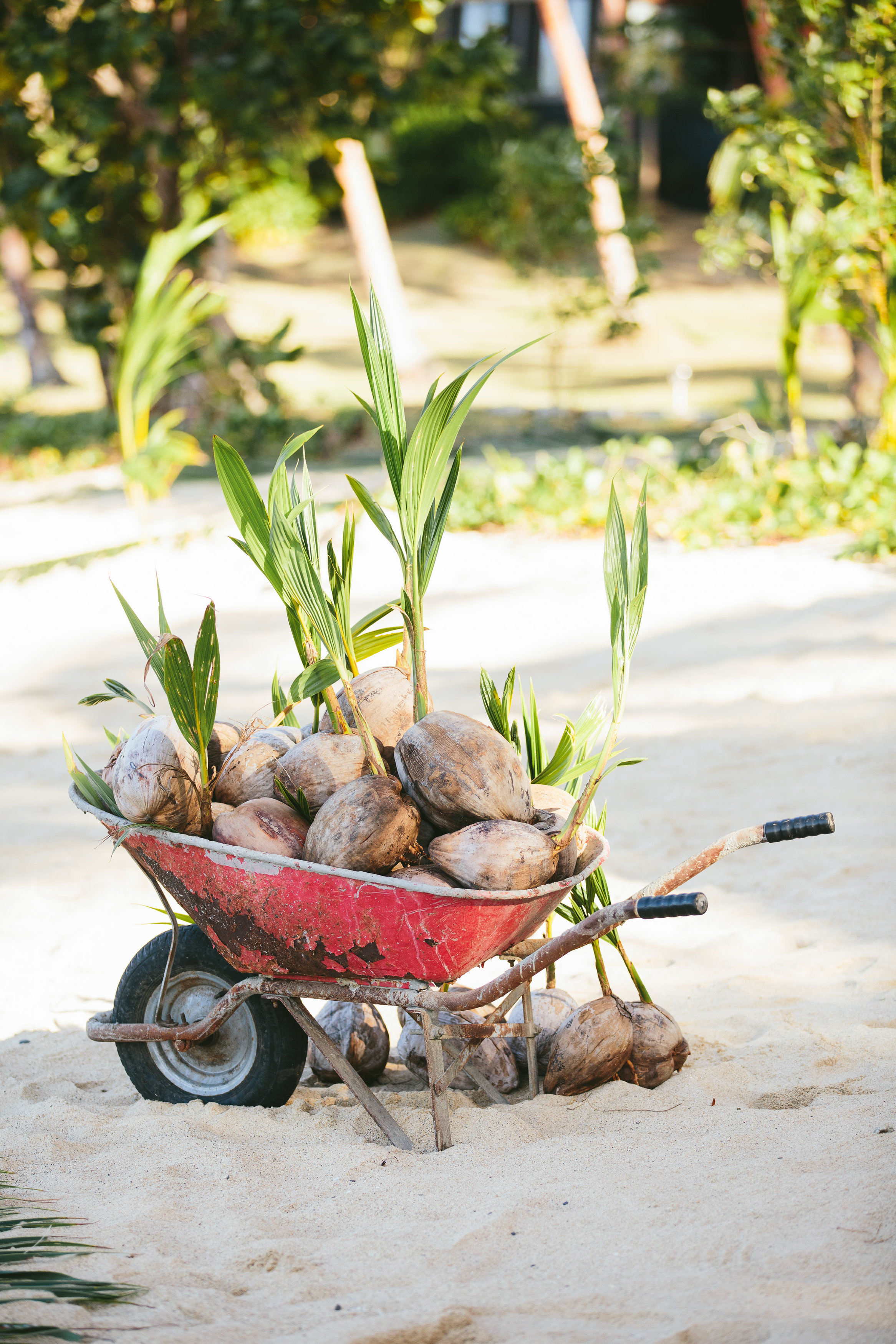 Fiji Wedding Decorations - The Remote Resort Fiji Islands - Coconuts