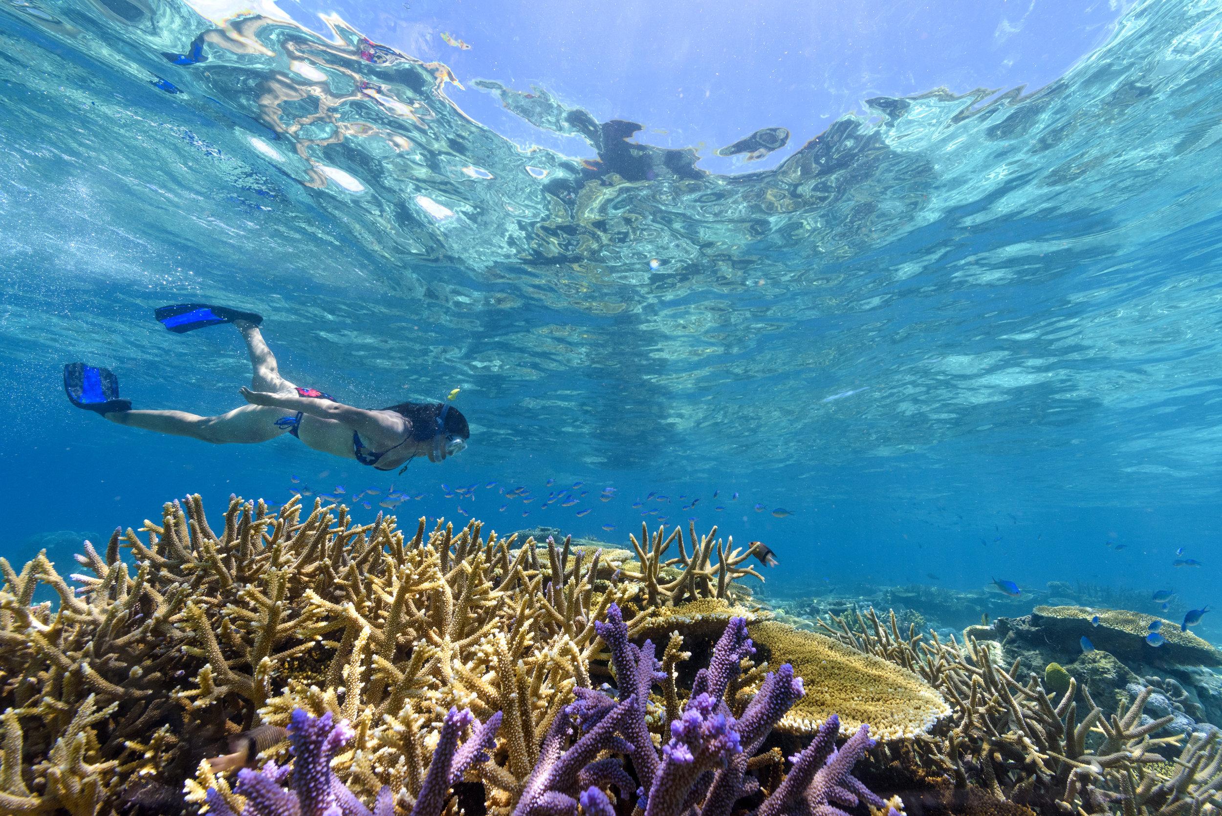 Fiji Best Resort Snorkeling - Rainbow Reef6.jpg