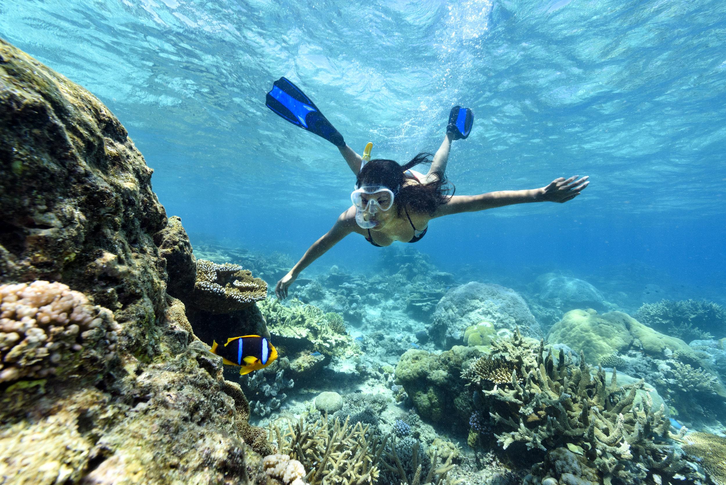 Fiji Best Resort Snorkeling - Rainbow Reef1.jpg