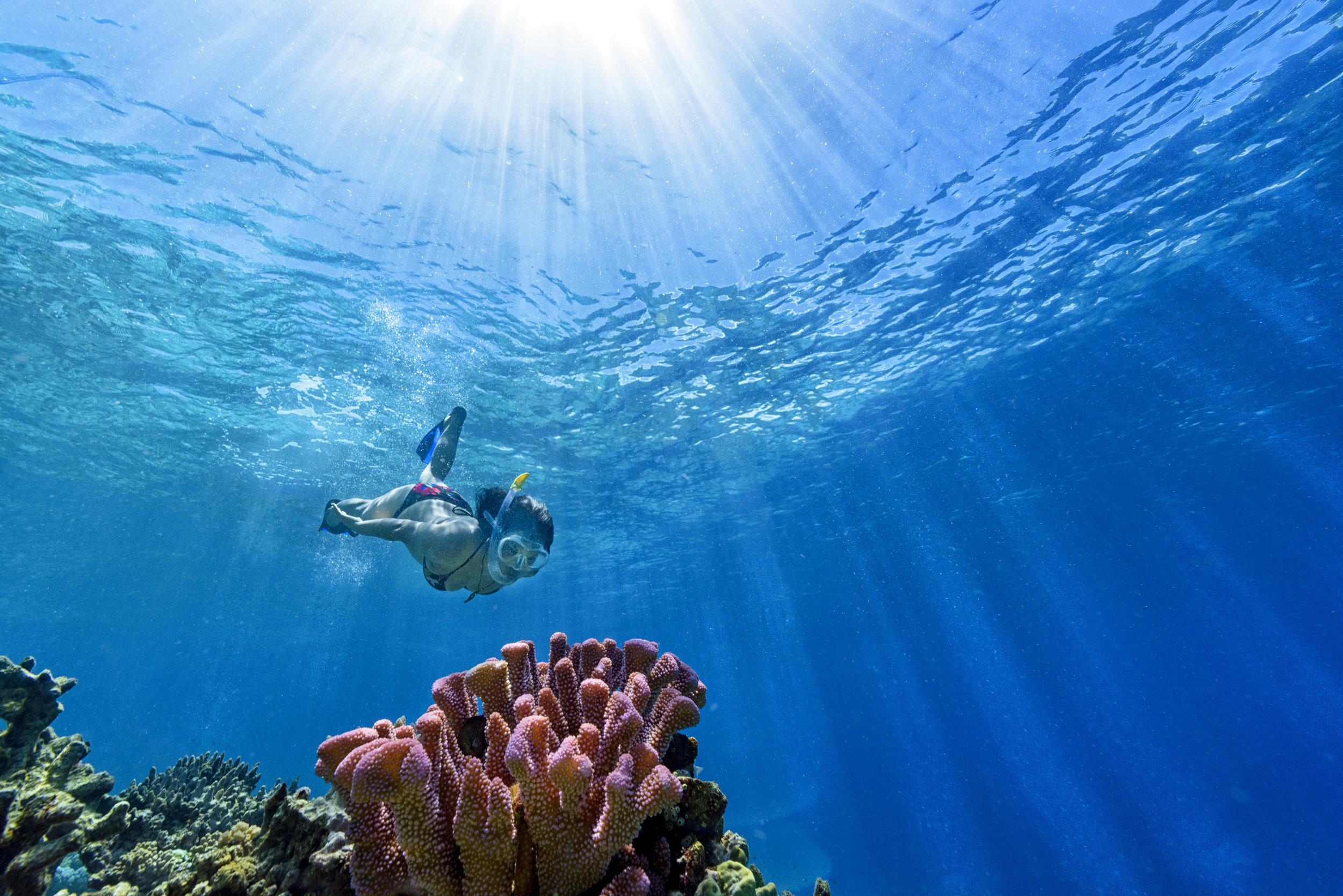 Fiji Best Resort Snorkeling - Rainbow Reef2.jpg