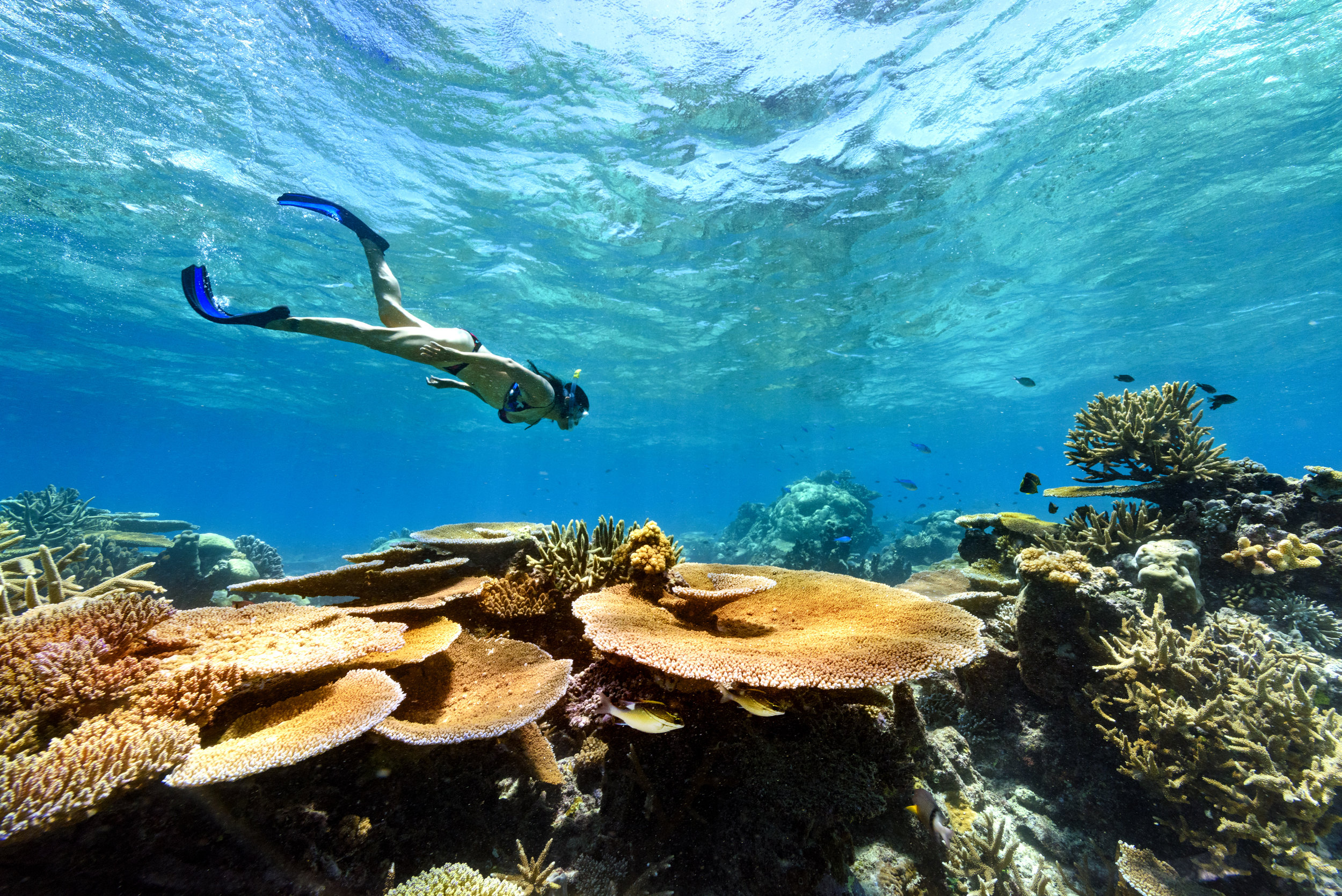 Fiji Best Resort Snorkeling - Rainbow Reef3.jpg