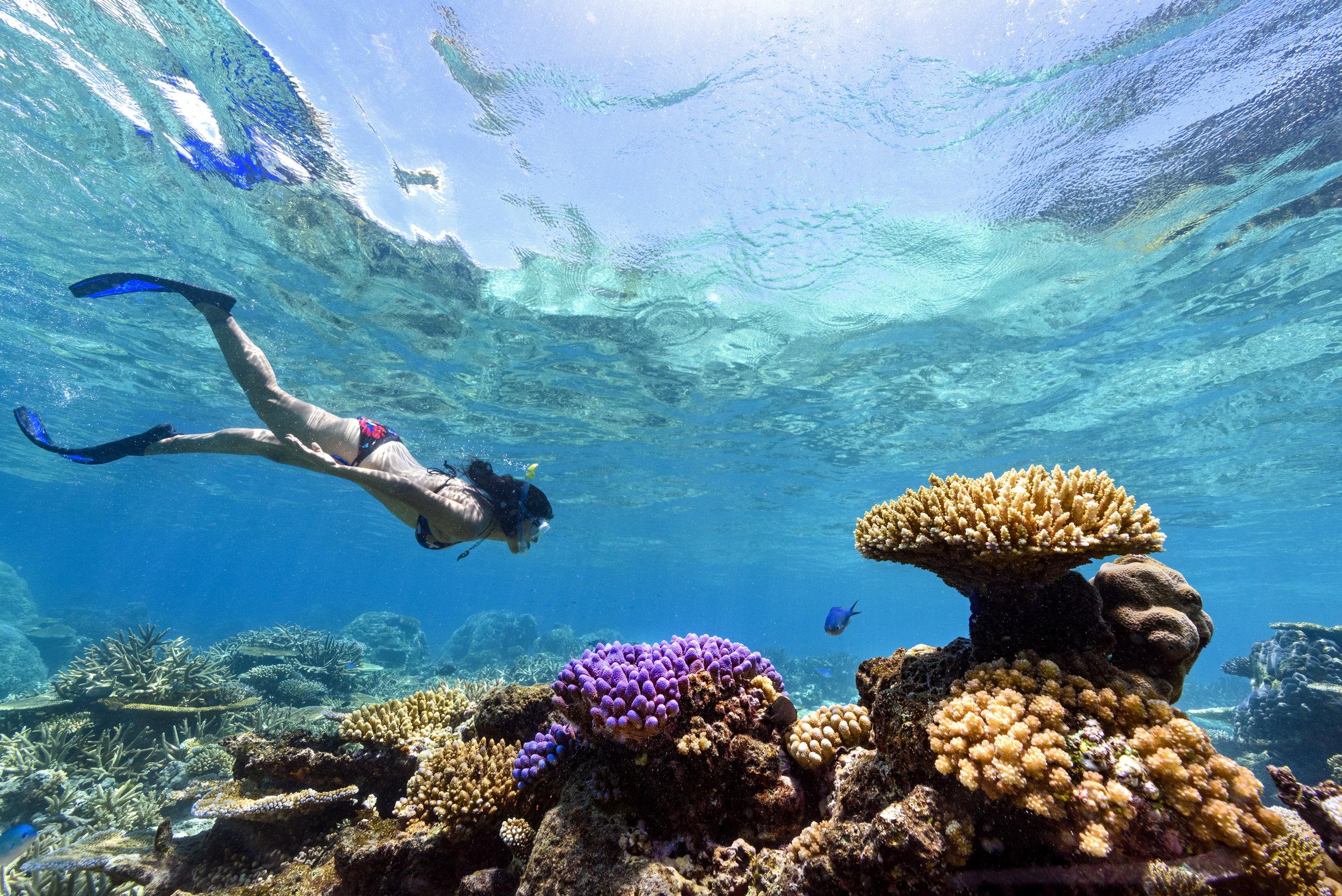 Fiji Best Resort Snorkeling - Rainbow Reef5.jpg