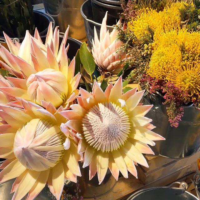 #proteas #notgarageflowers