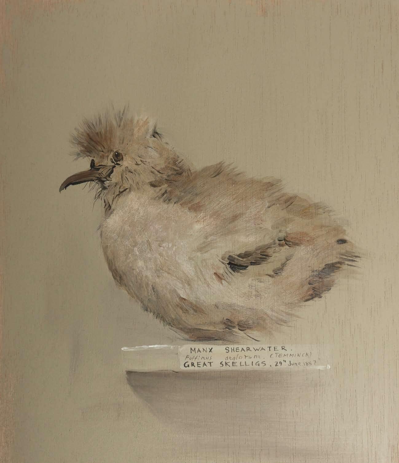 Recuerdos de Historia Natural_Page_03.jpg