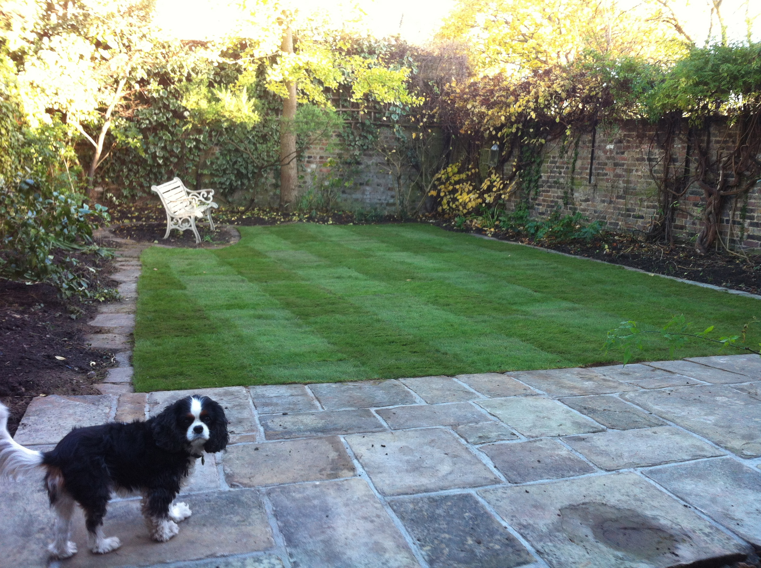 New lawn 3.JPG