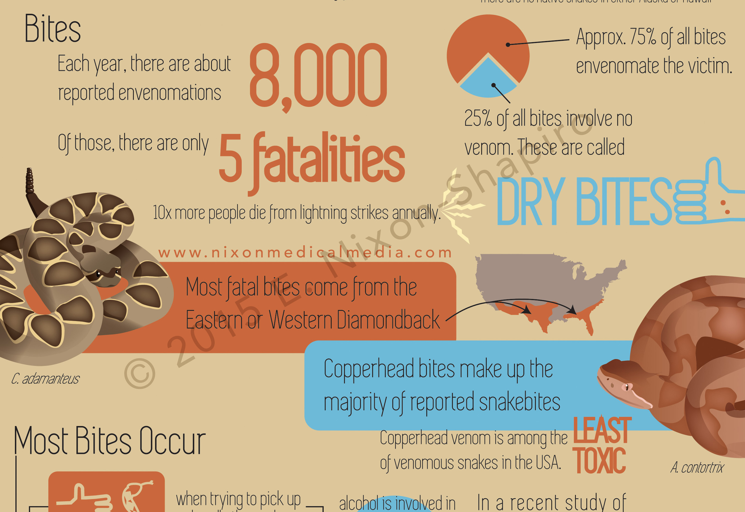 The Truth About Venomous Snakes in the USA (detail)