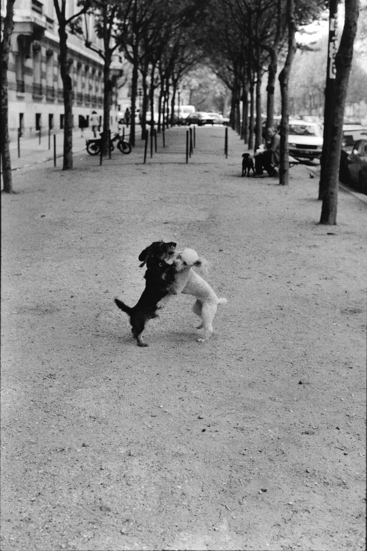 "Paris, 1982<span class=""photo-essays-link""><span class=""separator"">・</span><a href=""/photo-essays"">Photo-essays</a></span>"