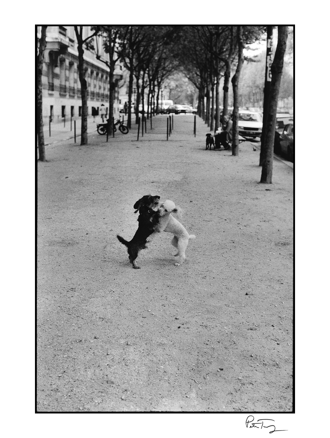"ID#85・Paris, 1982<span class=""print-link""><span class=""separator"">・</span><a onclick='document.getElementsByClassName(""sqs-lightbox-close"")[0].click();'>Thumbnails</a></span>"