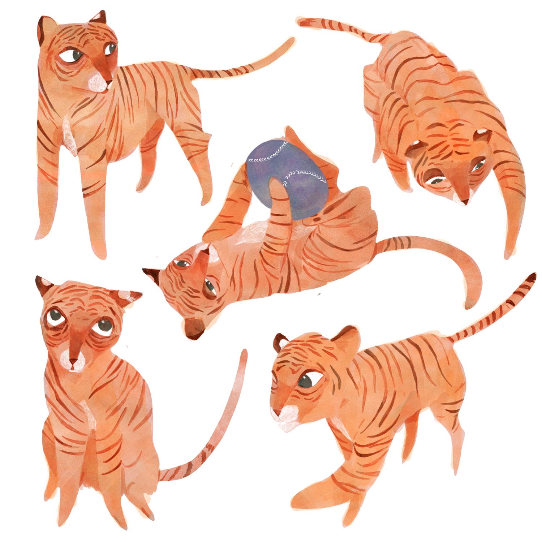 TigerContrast.jpg