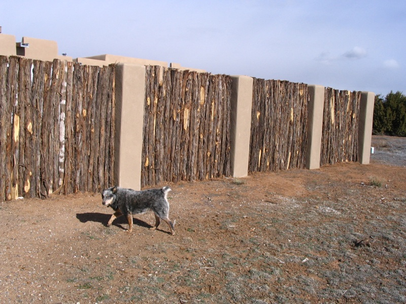 Natalie (my old blue healer) guarding formal coyote fence with stucco pillars